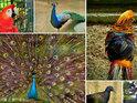 武吉占姆动植物园的封面