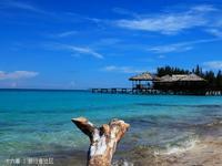 美人鱼岛的封面