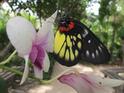 班迭斯雷蝴蝶中心的封面