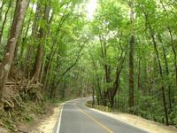 Mahogany森林的封面