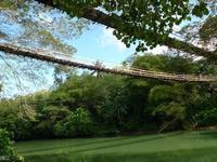 吊桥的封面