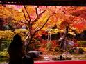 京都圆光寺的封面