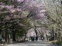 円山公園的封面