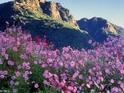 梨山风景区的封面