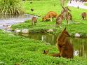 道格拉斯港野生动物栖息地动物园的封面