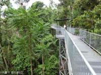 玛姆雨林天空步道的封面