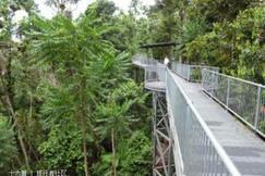 玛姆雨林天空步道