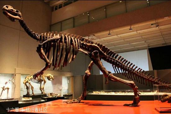 澳大利亚国家恐龙博物馆