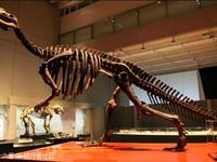 澳大利亚国家恐龙博物馆的封面