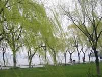 柳浪闻莺公园的封面