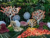 华南植物园的封面